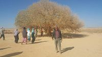 Group 15 Sep Baitulmaqdis, Amman Petra #1<br>Pohon Sahabi